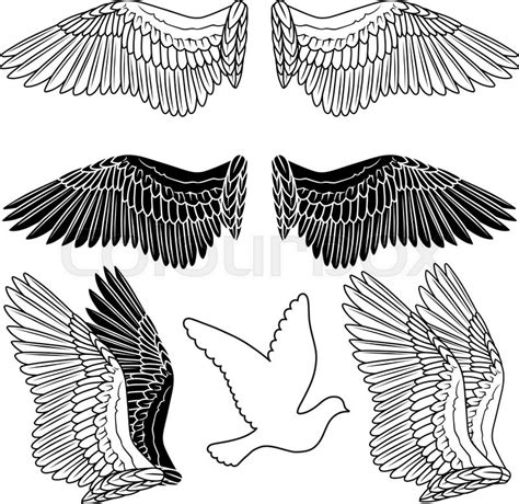 Bird Wings Outline by Pigeon Wings And Dove Linear Silhouette Isolated On Background Stock Vector Colourbox
