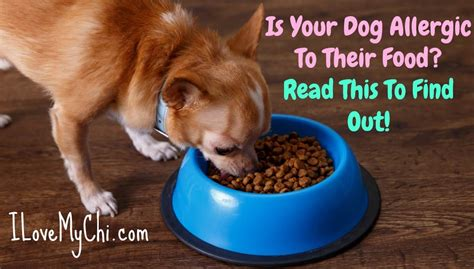 how to your to like other dogs is your allergic to their food here s how to tell
