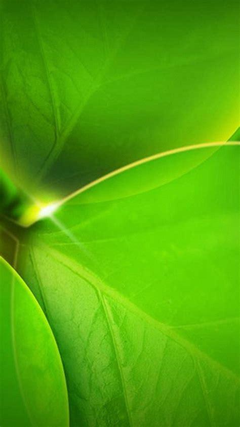 green leaves khlfyat ayfon bls iphone     sor