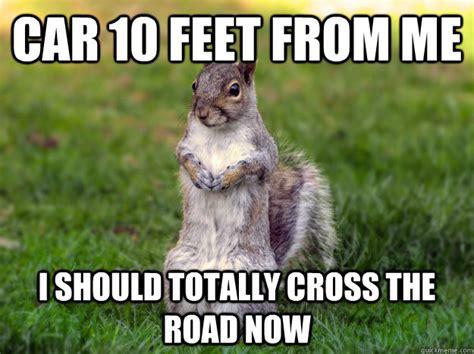 Squirrel Meme - plotting squirrel memes quickmeme