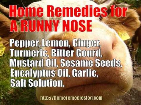 home remedies for runny nose stopping the sniffles naturally