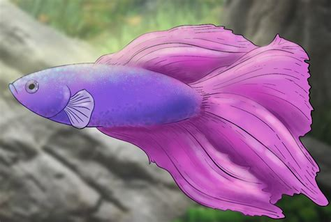 draw  betta fish draw central