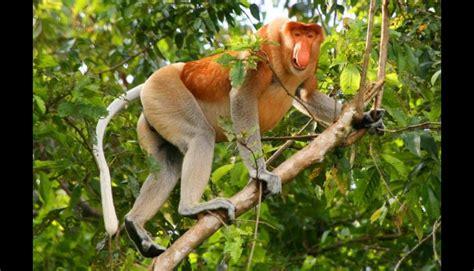 imagenes asombrosas de animales raros conoce los 10 animales raros en peligro de extinci 243 n