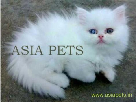 cat price cats price in india about animals