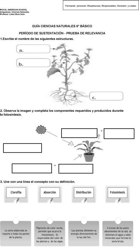 preguntas sobre guias alimentarias gu 205 a ciencias naturales 6 b 193 sico per 205 odo de sustentaci 211 n