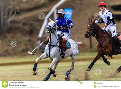 More Ponies For Polo by Polo Players Ponies Balance Editorial Image Image 33049415