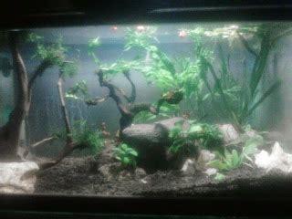 Lu Aquarium Ikan Hias ikan hias aquarium
