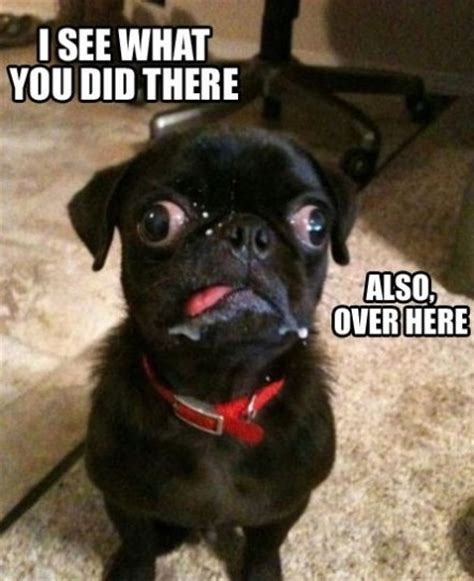 Derp Dog Meme - derp dog funlexia funny pictures