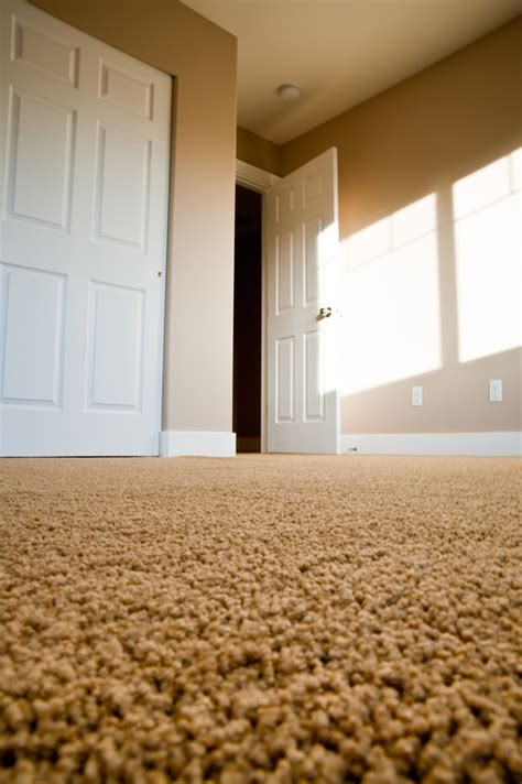 can you scotchguard a wool rug scotch guard protection carpet cleaning in elkhart in