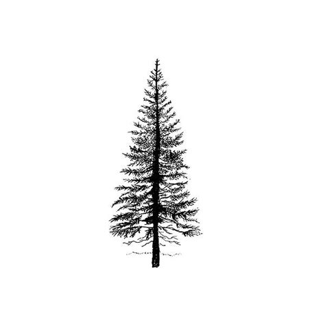 best 25 tree tattoos ideas collection of 25 pine tree designs