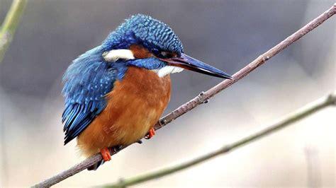 wohnungen diepholz ornis diepholz greift vogelwelt unter die fl 252 gel