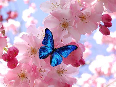 imagenes cool bonitas bonitas cool frases bonitas screenshot with bonitas with