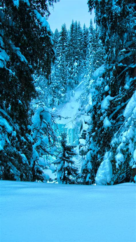 snow forest wallpaper  images