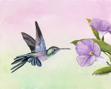 hummingbird at morning glory painting by charlotte yealey