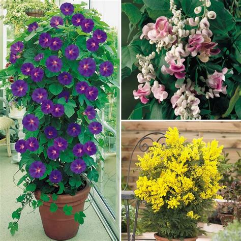 climbing plants with flowers evergreen potted plants for deck flowers flower plants