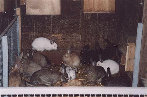 allevamento animali da cortile associazione l uovo di colombo animali da cortile e