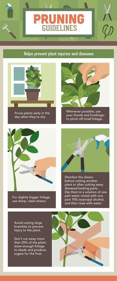 starting a vegetable garden for beginners 100 how to start a vegetable garden for beginners 5
