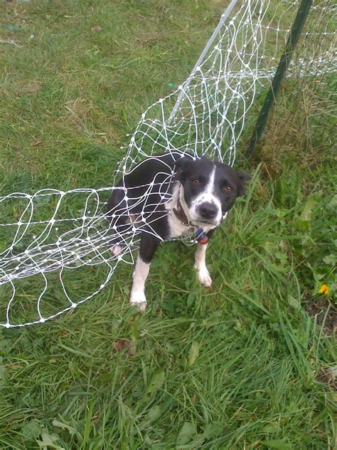 for dogs fence recomended electric fence for dogs ideas underground electric fence for