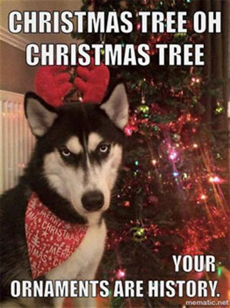 Christmas Animal Meme - loving these xmas dog funnies http www dfordog co uk