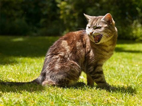 how to my aggressive how to handle aggression in your cat cat tree uk the uk s largest cat tree