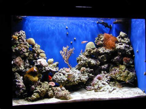design reef aquarium 150 gallon concave front reef tank aquarium design