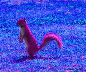 pink squirrel photo cindi smith photos at pbase com