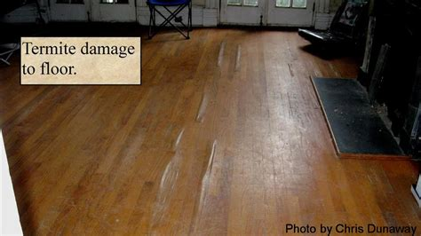 Termite Damage To Hardwood Floors by Quarter Termite Inspection