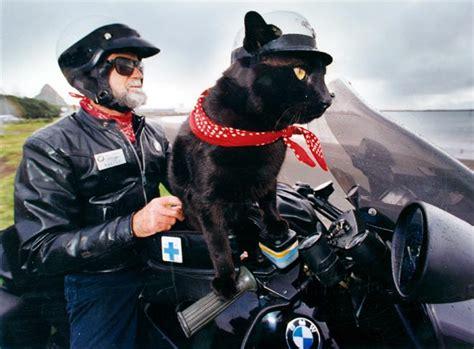 Motorradhelm Katzenohren by Rastus The Motorcycle Cat Motorcycles Te Ara