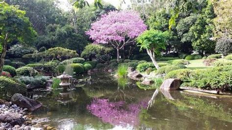 mt cootha botanical gardens japanese gardens picture of brisbane botanic gardens mt