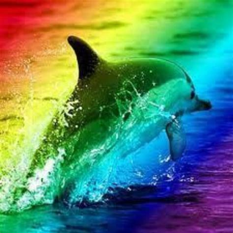 7 best images about rainbow dolphin pictures on pinterest