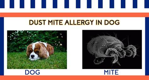 allergy symptoms in dogs dust mite allergies in symptoms and diagnosis allergy symptoms org