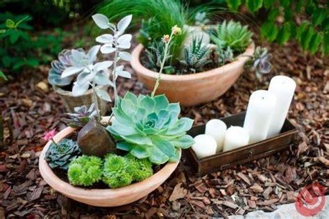 vasi per cactus vasi per piante grasse vasi