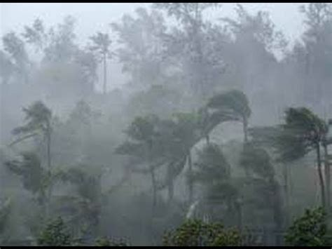 heavy wind and rain in khammam strong wind uproots