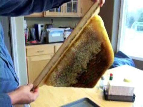 backyardhive new dvd alternative beekeeping using the top extracting honey from a top bar hive top bar bees
