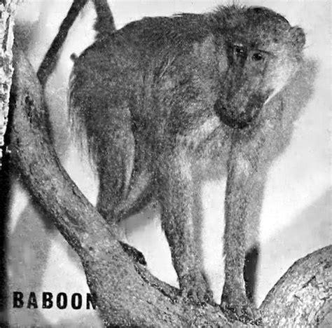 rhodesian heritage wildlife  rhodesia