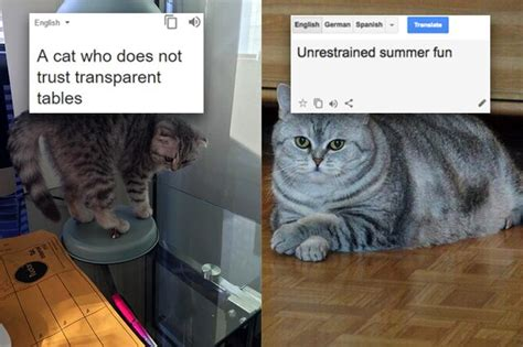 Russian Cat Meme - these poorly translated russian cat memes will make you