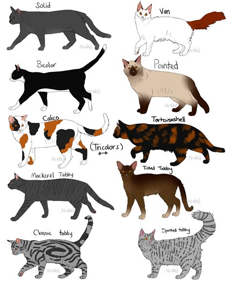 cat coat colors cat coat colors and patterns cat coat colors and patterns