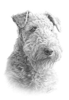 3410 Best AIREDALES images in 2019   Airedale terrier