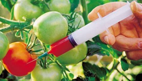 alimentos transgenicos 10 ejemplos de alimentos transgenicos ventajas y