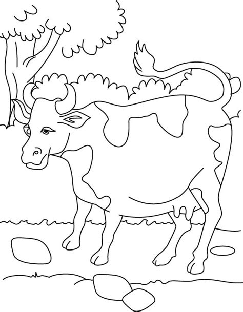 dairy cow coloring page free cow parts coloring pages