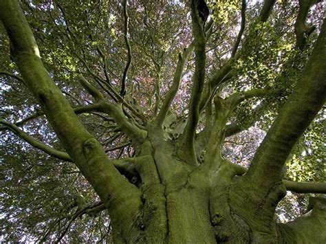 elm tree meaning elowen cornish name meaning elm tree trees pinterest