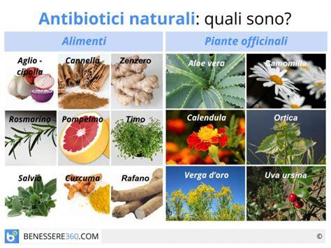 alimenti antirughe antibiotici naturali quali sono alimenti piante e preparati