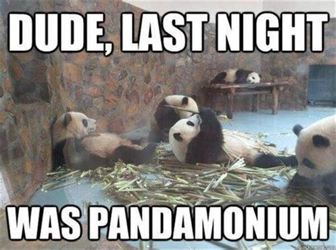 Good Meme Captions - 30 funny animal captions part 13 30 pics amazing