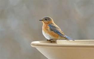 wild birds unlimited what bluebirds eat in the winter
