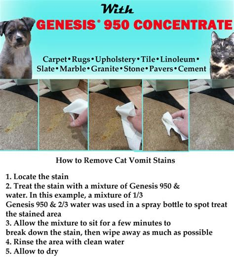 how to clean vomit from couch 17 best images about pet stain remover on pinterest