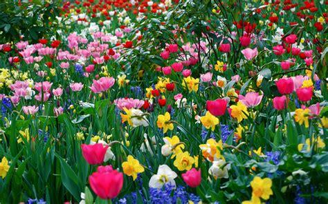 all best picos poze desktop flori buchete de flori flori de primavara poze imagini desktop