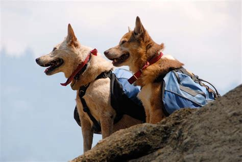 hiking dogs traveling with animals island trader vacations