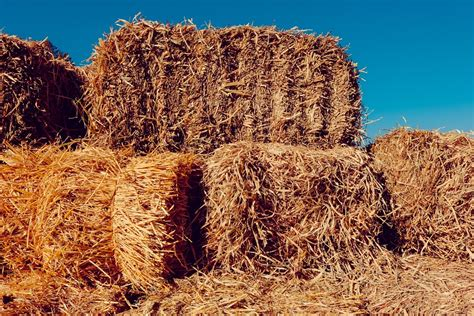 free photo hay farm nature country free image
