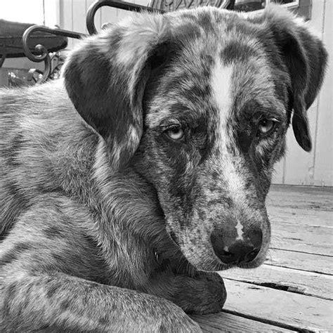 melatonin for puppies melatonin for dogs