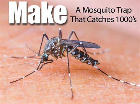 best outdoor fans for mosquitoes 38 best images about insect problem on gnat